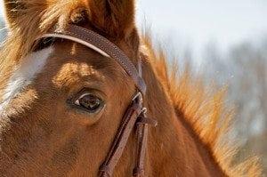 "Inspiring ""Horse Sense"""